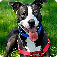 Adopt A Pet :: Ralphie - Hastings, NY