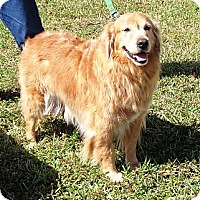 Adopt A Pet :: Tucker - Murdock, FL