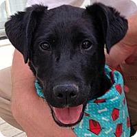Adopt A Pet :: ANDY - Glastonbury, CT
