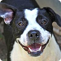 Adopt A Pet :: SALLY - North Augusta, SC