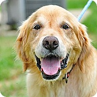 Adopt A Pet :: Brady - New Canaan, CT