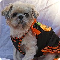 Adopt A Pet :: Mulan - Richmond, VA