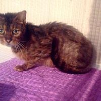 Adopt A Pet :: Fran - Zolfo Springs, FL