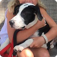 Adopt A Pet :: Zippy - Stamford, CT