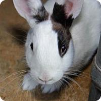 Adopt A Pet :: Fella - Williston, FL