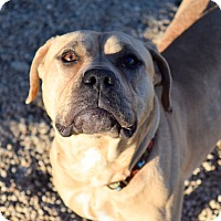 Adopt A Pet :: Glory - Meridian, ID