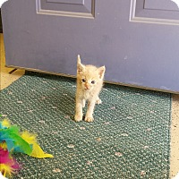 Adopt A Pet :: Peter - Scottsdale, AZ