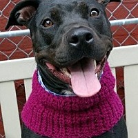 Adopt A Pet :: Zola *URGT* IMMED FOSTER NEEDED* - Staten Island, NY