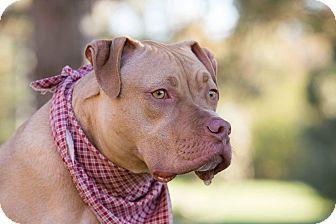 Hound (Unknown Type)/Terrier (Unknown Type, Medium) Mix Dog for adoption in Flint, Michigan - Scotch - Rescued