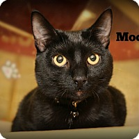 Adopt A Pet :: Moore - Springfield, PA