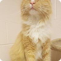 Adopt A Pet :: Napoleon - Gadsden, AL