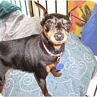 Adopt A Pet :: Raidan - Phoenix, AZ