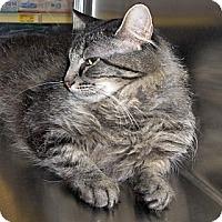 Adopt A Pet :: Fluffy - Richmond, VA