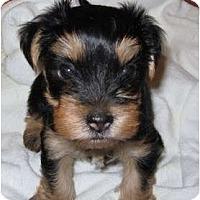Adopt A Pet :: Kourtney - Hardy, VA