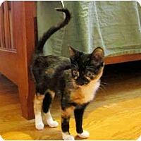 Adopt A Pet :: Starla - Colmar, PA