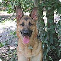 Adopt A Pet :: Lu-Lu - Green Cove Springs, FL