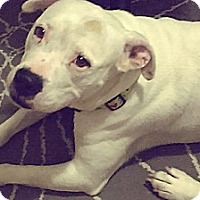 Adopt A Pet :: Happy - San Diego, CA