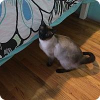 Adopt A Pet :: Guinness - Chesterfield Township, MI