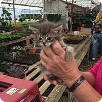 Adopt A Pet :: Dragon - McDonough, GA