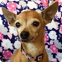 Adopt A Pet :: Pearl - Vacaville, CA