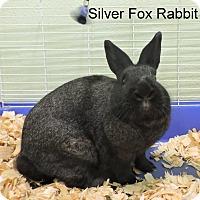 Silver Fox Mix for adoption in Slidell, Louisiana - Silver Fox