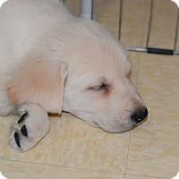 Adopt A Pet :: Tala - Ogden, UT