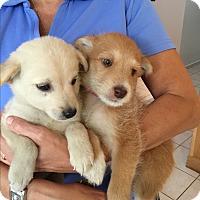 Adopt A Pet :: Noah and Choice - Pennigton, NJ