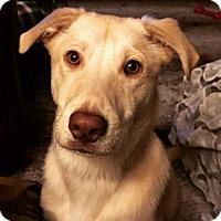 Adopt A Pet :: Forrest - APPLICATIONS CLOSED - Livonia, MI