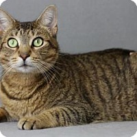 Adopt A Pet :: Soybean - Blackwood, NJ