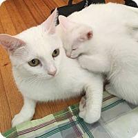 Adopt A Pet :: Snow - Marina del Rey, CA
