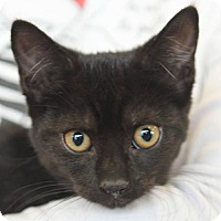 Adopt A Pet :: Kahlua - Thornhill, ON