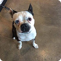 Adopt A Pet :: Kipper - Weatherford, TX