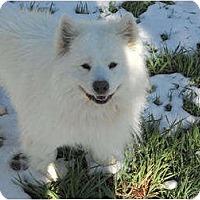 Adopt A Pet :: Blake - Arvada, CO