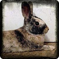Adopt A Pet :: Oliver - Lakeland, FL