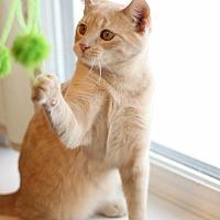 Adopt A Pet :: Ginger/ playful, curious boy - Bryn Mawr, PA