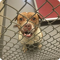 Adopt A Pet :: McCook - Bloomfield, CT