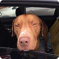 Adopt A Pet :: Jed - Salem, OH