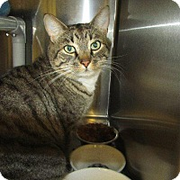 Adopt A Pet :: Lancelot - Grand Junction, CO