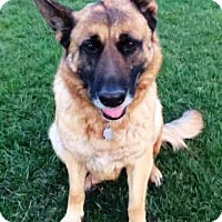 Adopt A Pet :: Ava - Pleasant Grove, CA