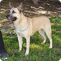 Adopt A Pet :: Roxanne - Greeneville, TN