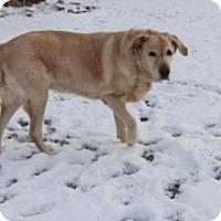 Adopt A Pet :: Holly - Warrington, PA