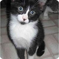 Adopt A Pet :: Polly - Davis, CA
