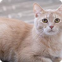 Adopt A Pet :: Sven - Chicago, IL