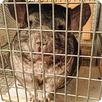Adopt A Pet :: Archimedes - Granby, CT