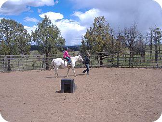 Pony - of America for adoption in Durango, Colorado - Calamity Jane