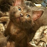 Adopt A Pet :: Nila - Lyons, IL