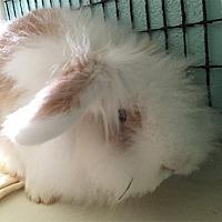 Adopt A Pet :: TEAL - San Clemente, CA