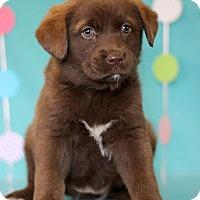 Adopt A Pet :: Raphaela - Waldorf, MD