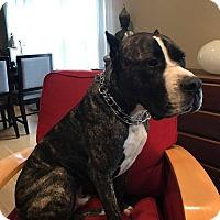 Adopt A Pet :: Jerry - Salem, OR