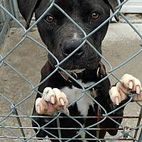 Adopt A Pet :: Zoey - Hanna City, IL